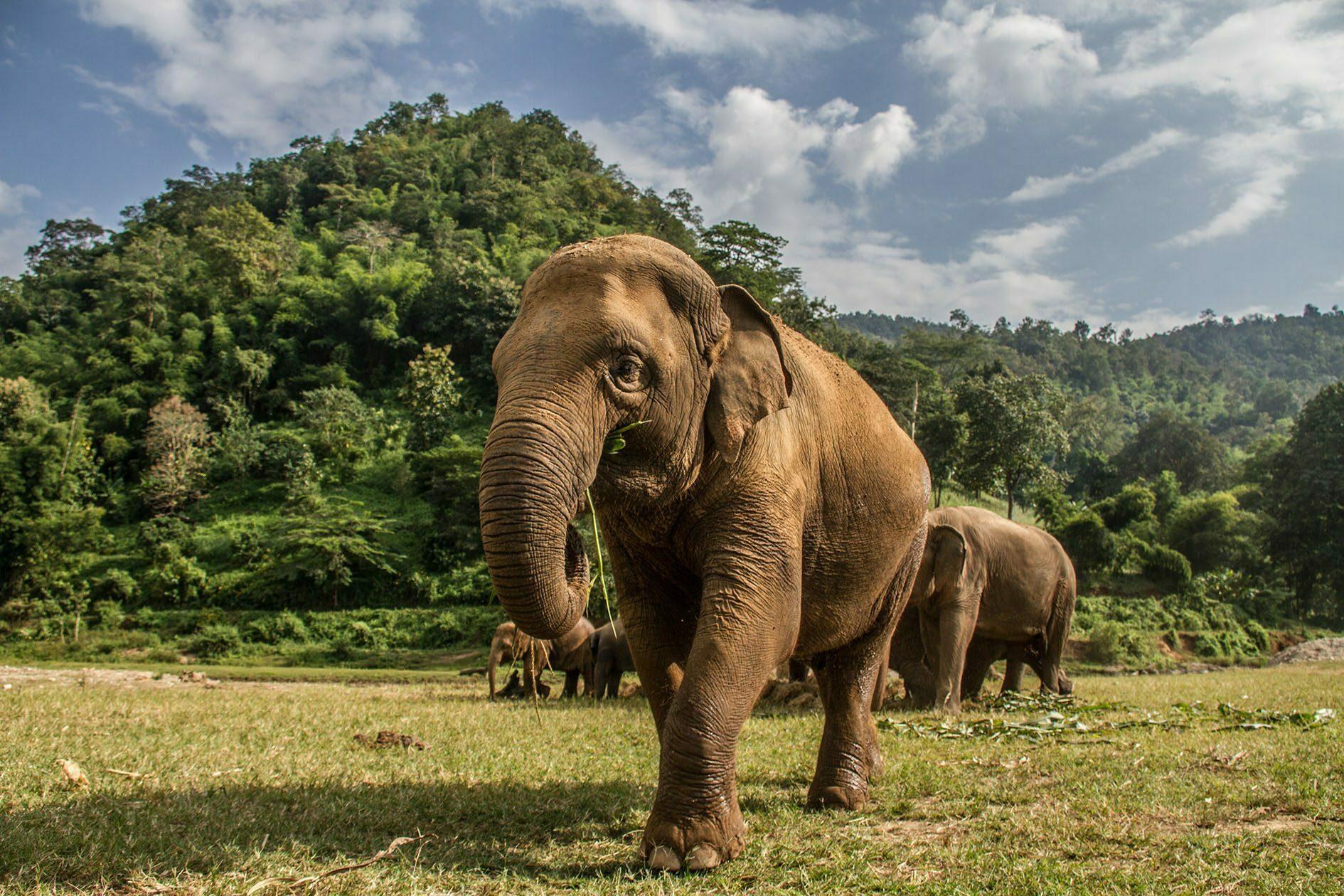 Elephant Nature Park Chiang Mai (1)