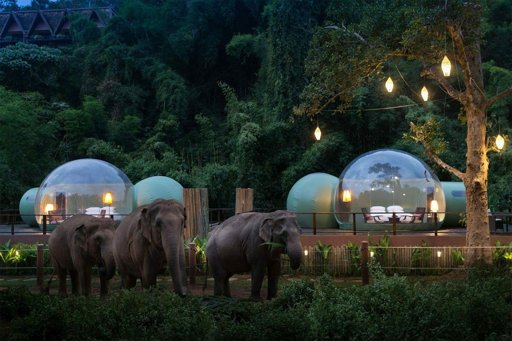Jungle Bubbles at Dawn