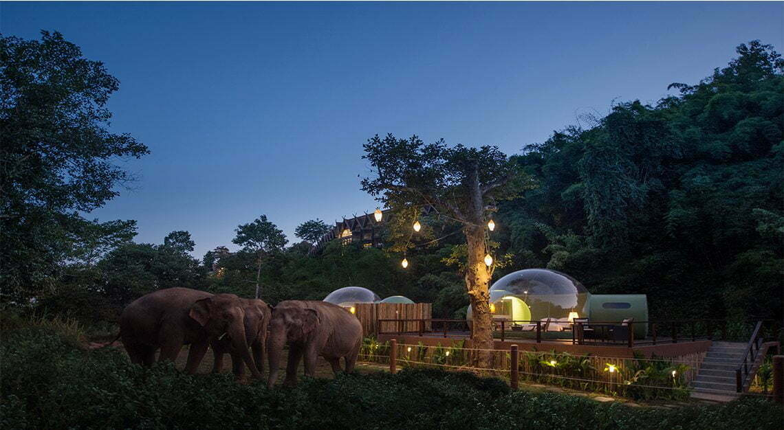 Anantara Jungle Bubble