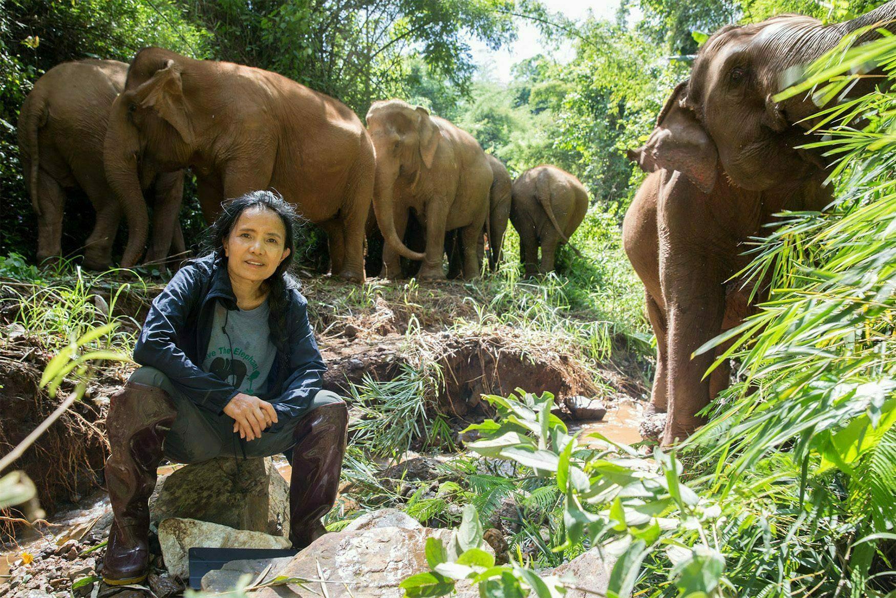 Lek Chailert with her elephants_m resized