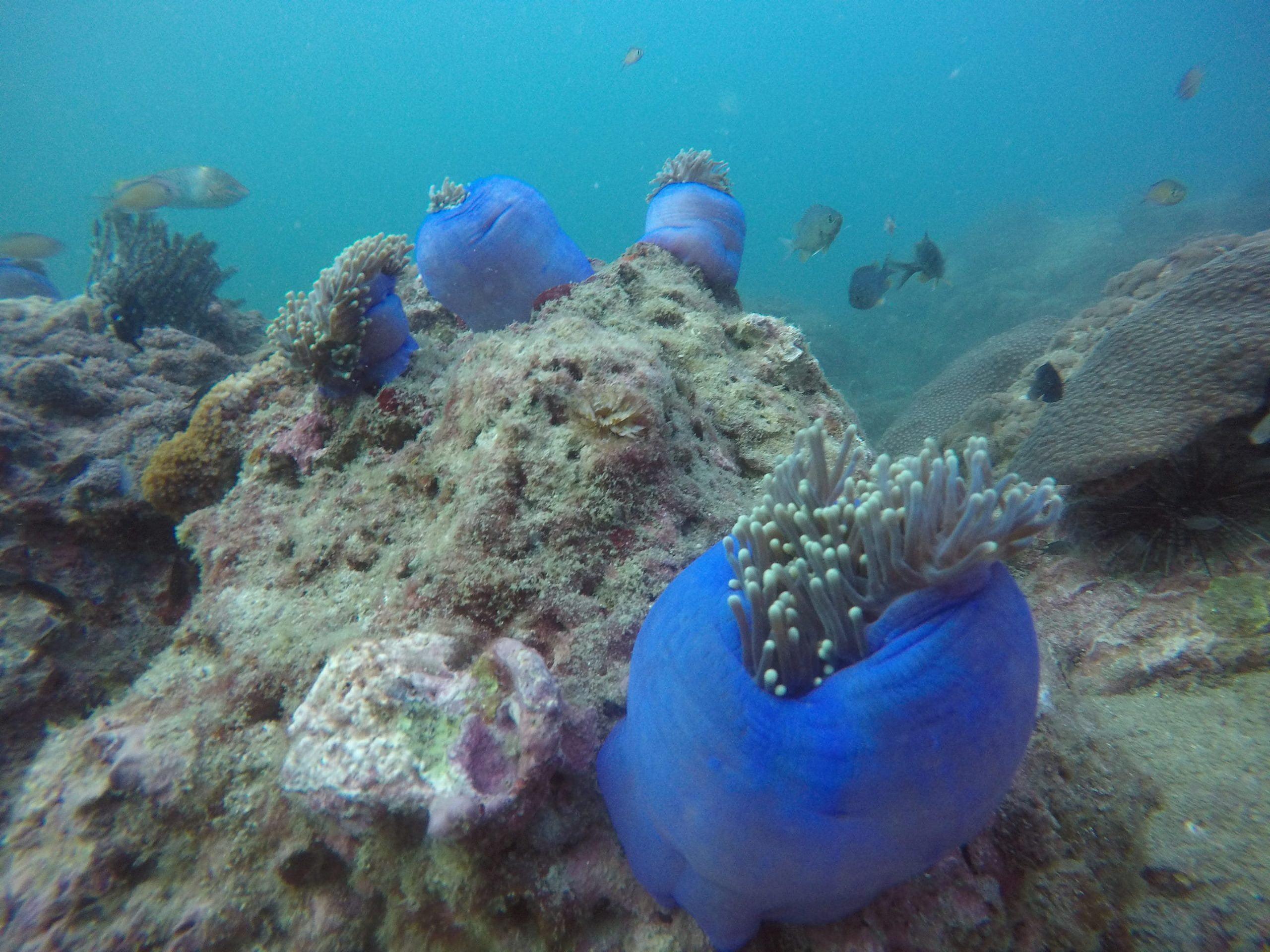 scuba scenes 4